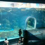 「水の世界を旅しよう!」人気の水族館、海響館(下関市立しものせき水族館)に行って来ました。