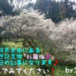 今回は以前から訪ねてみたかった山口県柳井市余田にある、国指定天然記念物「臥龍梅」を今年ついに散策しに行って来ました!思っていた通りとても綺麗な景観でしたよ♪是非読んでみて下さい。