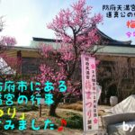 今回は山口県防府市にある日本最初の天神さま、防府天満宮の「梅まつり」を訪ねてきましたので記事にしてみました。御祭神である道真公の愛した梅の花が今年もたくさん咲いていましたよ、皆さんも機会があれば是非訪ねてみて下さい!