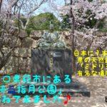 今回は山口県萩市にある「萩城跡 指月公園」にお花見に行って来ました♪「中国の大守」と言われた毛利輝元が着手して築城した「萩城の跡地」…この季節になると500本余りの「ソメイヨシノ」の桜で覆い尽くされとても綺麗なんです。そしてなんといっても日本ではここでしか見れない県の天然記念物の「ミドリヨシノ」いや〜見所満載ですよ!